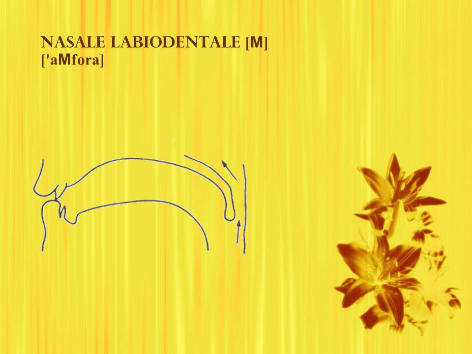 Nasale labiodentale [M] [ aMfora]